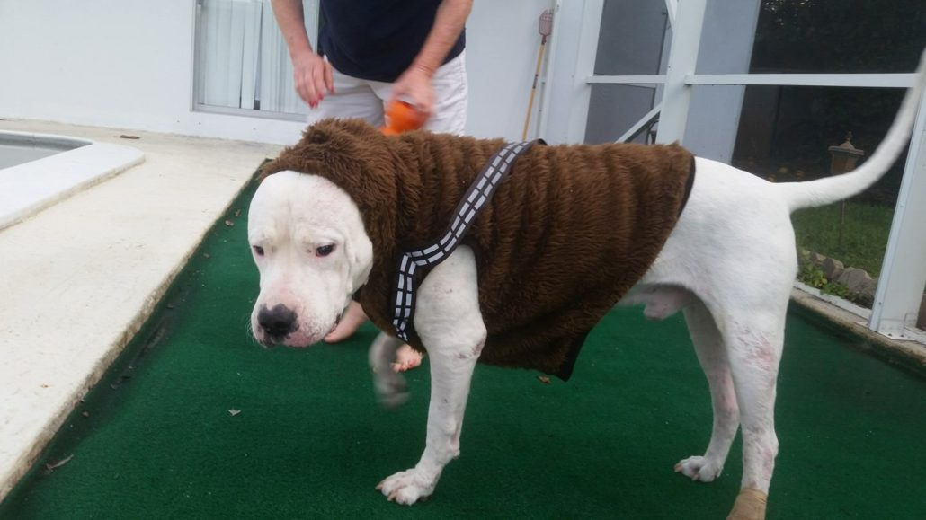 Dogo Argentino Foster Program