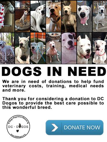 DC Dogos | Dogo Argentino Rescue & Rehabilitation
