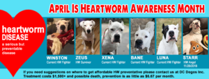 Heartworm Awareness Month