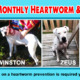 Heartworm Prevention
